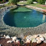 Une piscine naturelle avec aménagement paysager - La Maison des Travaux